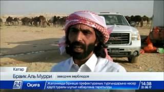 Тысячи верблюдов вернулись из Саудовской Аравии в Катар