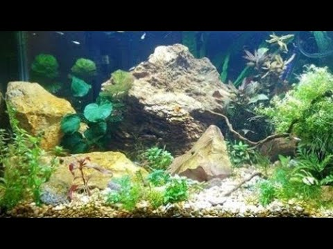 Which Rocks Can I Put In My Aquarium?  Geology Basics - Aquascape Your Fish Tank For Free