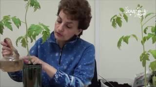 видео Почему желтеют листья рассады  Удобрения для рассады