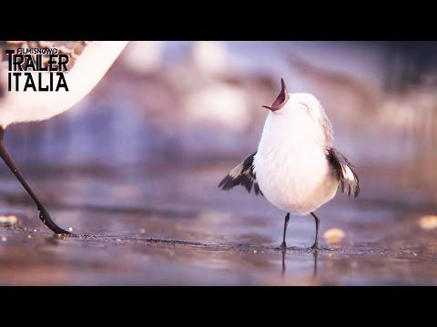 Alla Ricerca di Dory - PIPER arriva il piccolo beccaccino affamato [HD]