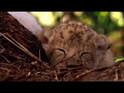 Белый лев. ШИКАРНЫЙ ФИЛЬМ