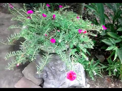 Flores Rayo de Sol O Amor Por un Rato/Flowers Sunshine or Love for a Mouse