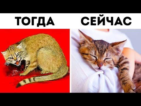 Как кошки приручили нас (дважды!)