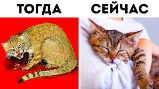 Как кошки приручили нас дважды