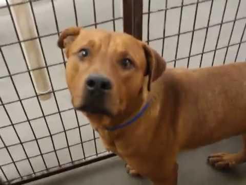 ADOPTED Gus ID #131899 - San Jacinto, CA - Ramona Humane Society
