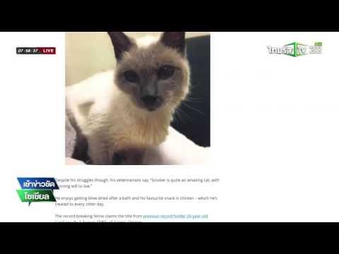 กินเนสบุครับรองแมวอายุยืนที่สุดในโลก | 11-05-59 | เช้าข่าวชัดโซเชียล | ThairathTV