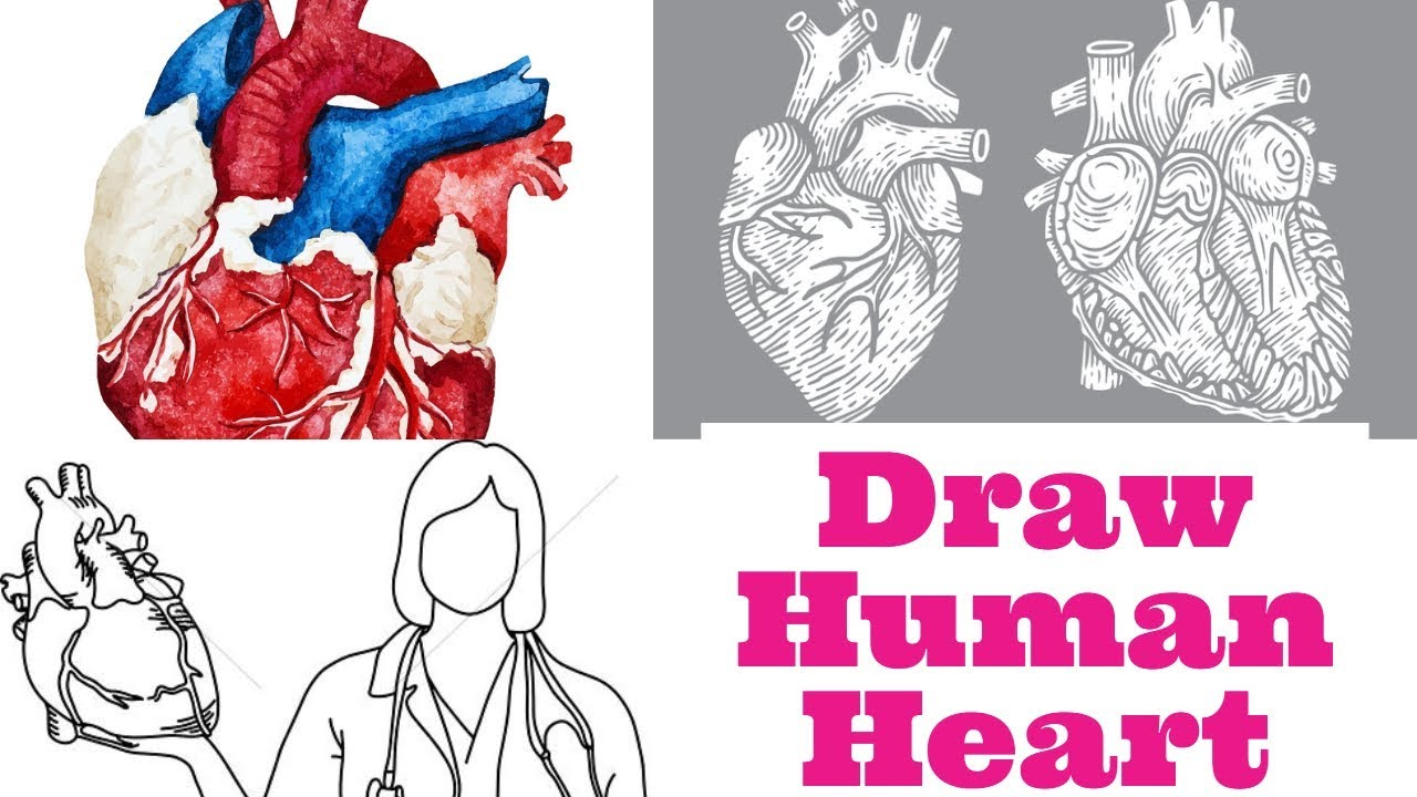 How To Draw Human Heart In Easy Way Biology Ladder Tips Youtube