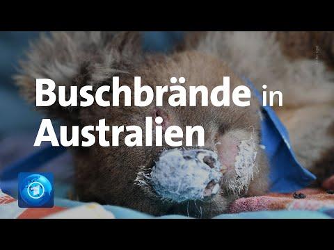 Buschbrände In Australien: Bereits Millionen Hektar Land Sind Verbrannt