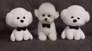 Very cute puppies compilation