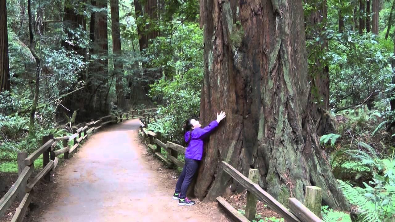 San Francisco Muir Woods Youtube