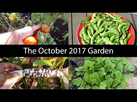 Monthly Gardening Series – October Garden Tour, Harvests & Things To Do!