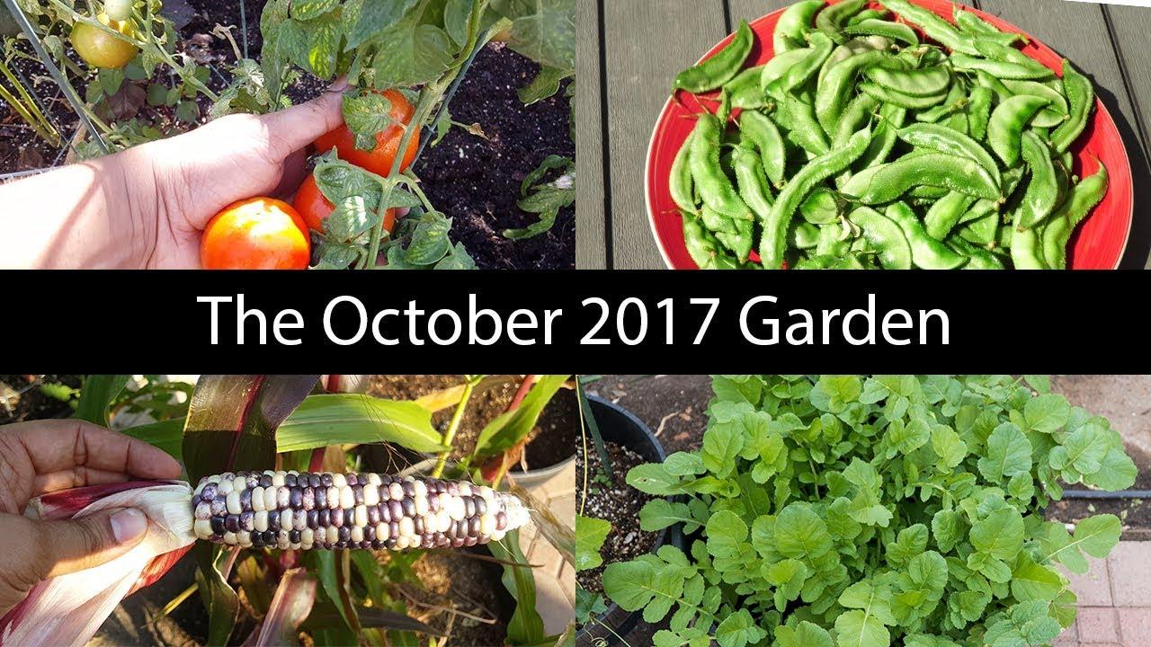 Monthly Gardening Series October Garden Tour Harvests