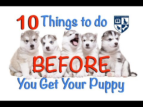 10 Things to do BEFORE you get a new puppy or dog.