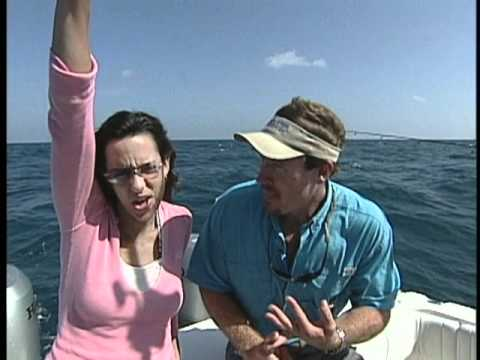 Shark fishing off of florida 39 s gulf coast youtube for Gulf coast fishing report