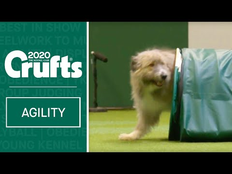Heartwarming Rescue Dog Agility | Crufts 2020