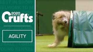 Heartwarming Rescue Dog Agility | Crufts 2020