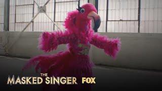 The Clues: Flamingo | Season 2 Ep. 6 | THE MASKED SINGER