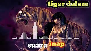 suara inap walet tiger dalam