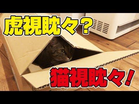 箱の中から家族を監視する得意気な猫さん!