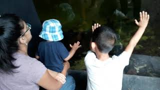 Mum and the boys checking out the fish at the zoo 14.8.18