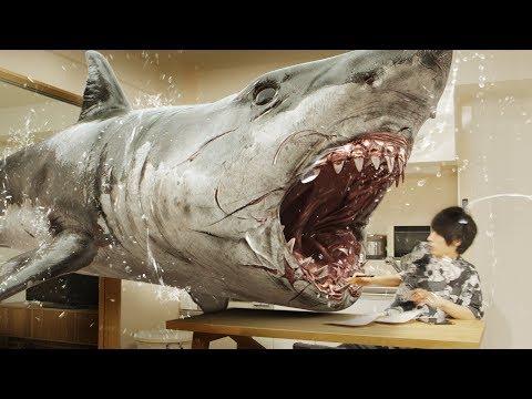 SHARK attacks my