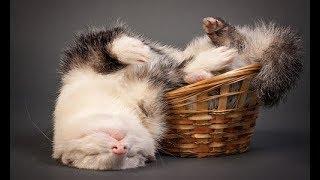 Интересные факты о домашних животных  Домашние животные видео Смешное о животных