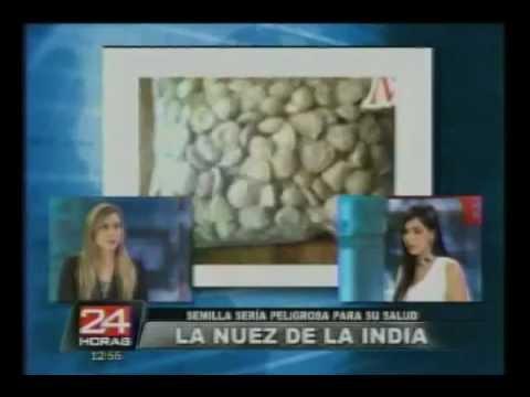Nuez de la India. Peligro. Entrevista de Panamericana a Lorena Romero Lazo
