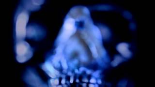 Ayahuasca: La Pequeña Muerte - Ayahuasca: The Little Death