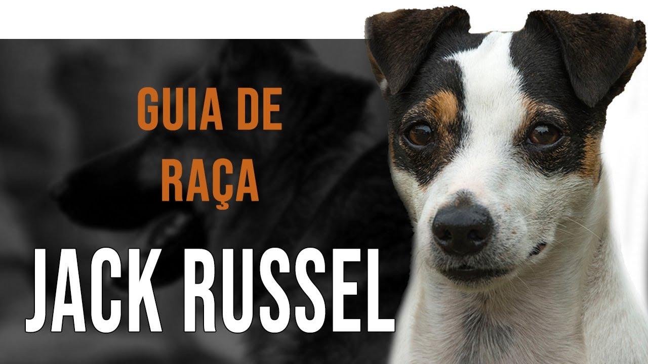 JACK RUSSEL - Tudo sobre a raça