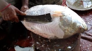 Sea Fish Cutting Nicely | Professional Fish Cutter