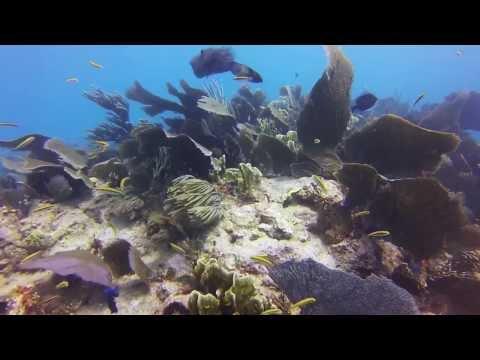 Diving Key Largo movie