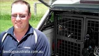 German Shepherd Law Dogs Training - Stanthorpe Queensland Australia