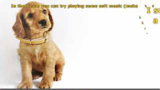 Useful Advice To Help Conquer A Dog's Fear Of Loud Noises