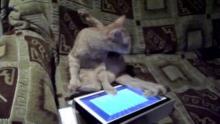 Cat and iPad