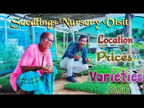 Visit to an Excellent Seedlings Nursery with Prices and Brands