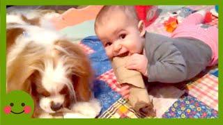 Videos para niños ★ Divertidos videos de comedia para bebés y animales y falla