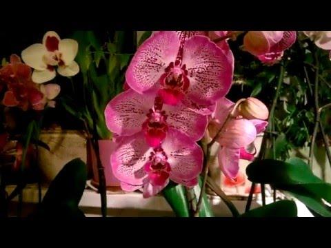 Орхидеи - уход, фото, продажа. Справочник видов орхидей
