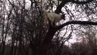 собака ЛАПА на дереве охотится на белку
