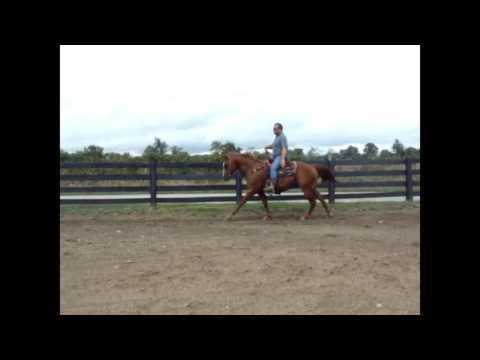 SORREL QUARTER HORSE RANCH GELDING