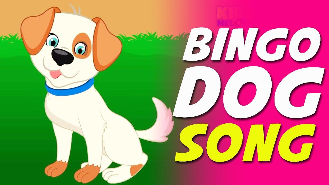 Bingo Dog Video
