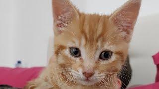 CUTEST KITTEN IN THE WORLD