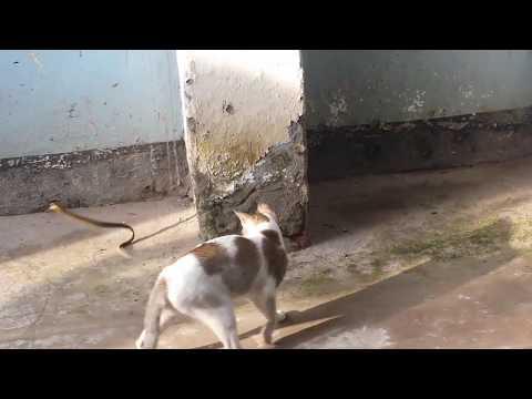 Cat and snack a vary nice  playing বিড়াল এবং সাপের খেলা যশোর নিউটন