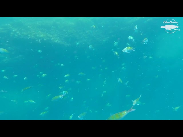 Snorkeling around Sea lions in Loreto, BCS, Mexico.