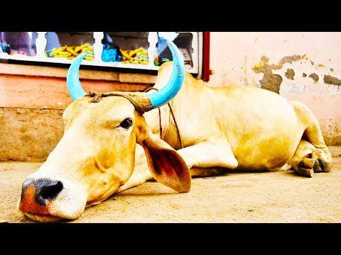 Hindu Fundamentalists Killing Muslims Over Cows