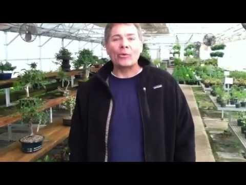 Bonsai Nursery Introduction You