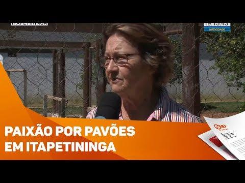 Paixão por pavões em Itapetininga - TV SOROCABA/SBT