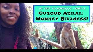 My Trip To Morocco - Part 3: Monkey Bizzness in Ouzoud Azilal