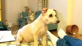 見た目の変化に猫が混乱、同居のワンコにおっかなびっくり