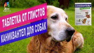 Таблетка от глистов Каниквантел для собак и котов | Обзор таблеток от глистов Каниквантел