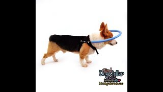 Mintbowl Blind Dog Bumping (Anti-Collision) Collar India only at Rs. 999 only,  Mob 9979035679